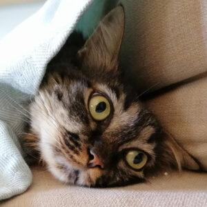 Τσίτσος η γάτα